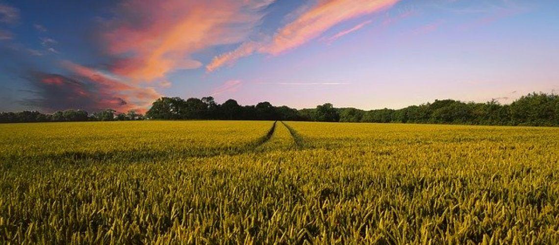 countryside-2326787_640